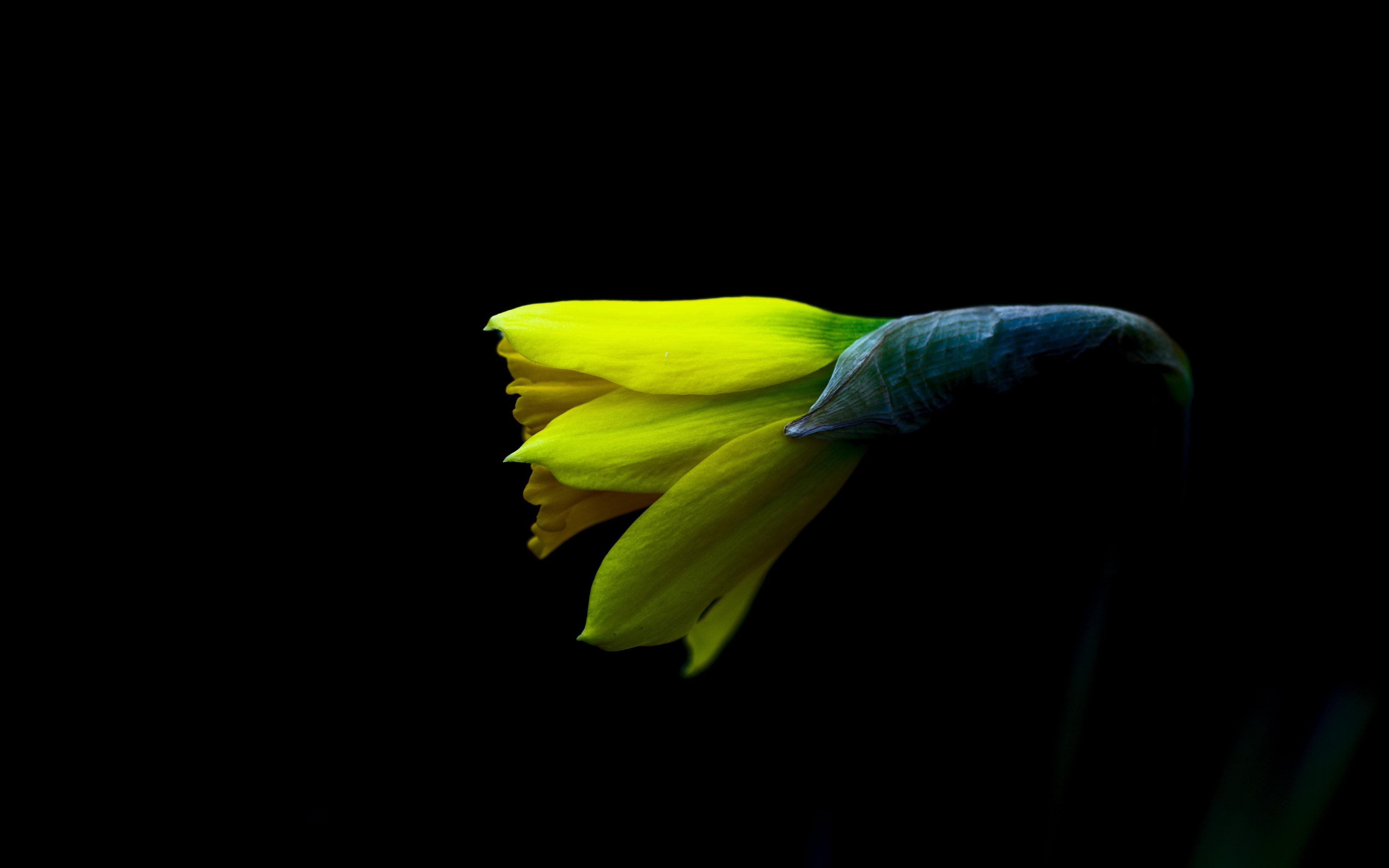 Spring by Peter Apas